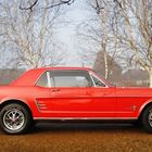 Ford Mustang Notchback -