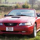 REF 47 2000 Ford Mustang Converitable -